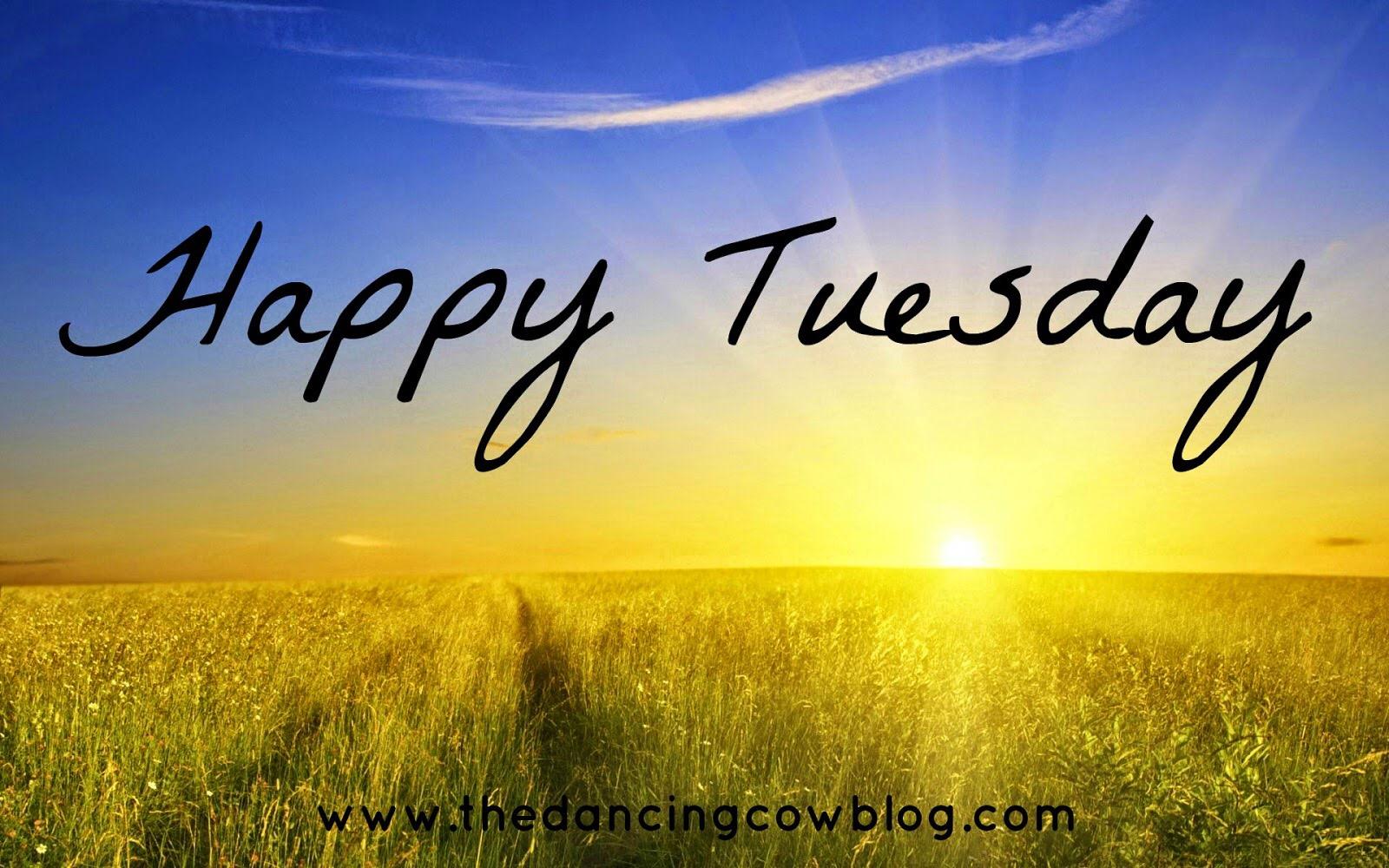 Happy Tuesday Evening